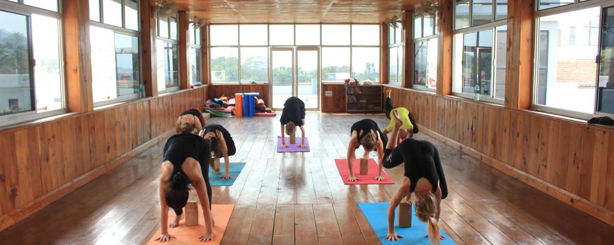 yoga in rishikul yogshala