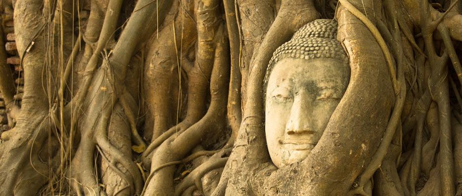 Buddha Tree Ayutthaya
