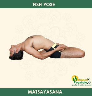 Fish Pose (Matsyasana)