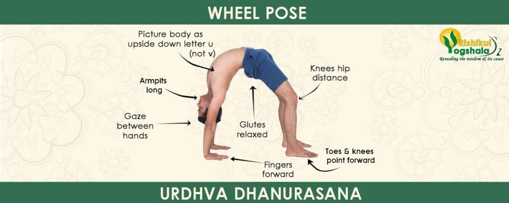 Wheel Pose (Urdhva Dhanurasana)