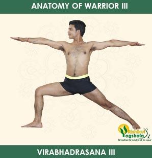 anatomy-of-warrior-3