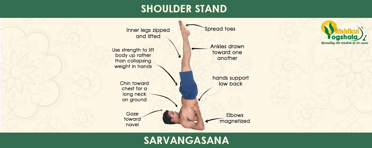 Shoulder Stand (Sarvangasana )