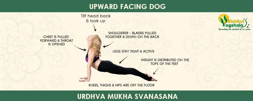 upward-facing-dog-pose